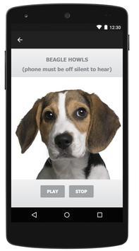 Beagle screenshot 5