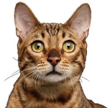 Cat Sounds & Cat Meows poster