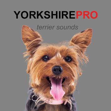 Yorkshire Terrier Dog Sounds poster