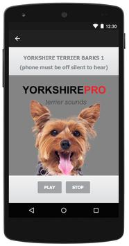 Yorkshire Terrier Dog Sounds apk screenshot