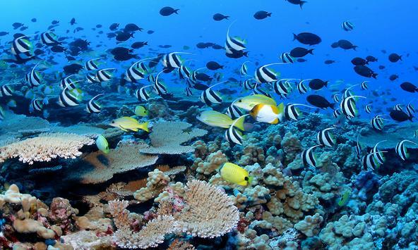 Deep Sea Wallpapers apk screenshot