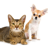 Cats and Dogs Jigsaw Puzzles Game icon