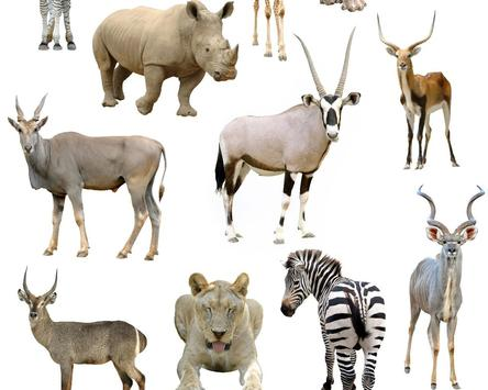 Animals of the World Jigsaw Puzzles Game apk screenshot