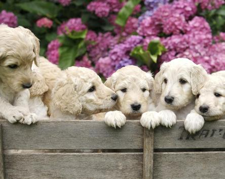 Best Dogs and puppies Jigsaw Puzzles Game screenshot 4