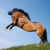 Best Horses Jigsaw Puzzle Game icon