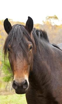 Best Horses Jigsaw Puzzle Game poster