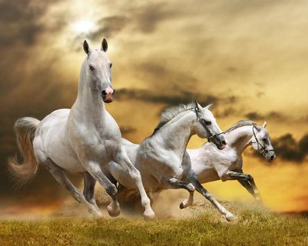 Best Horses Jigsaw Puzzle Game apk screenshot