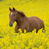Best Horses Jigsaw Puzzles Game icon