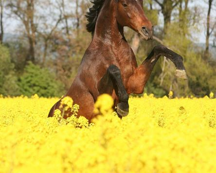 Best Horses Jigsaw Puzzles Game apk screenshot