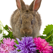 Best Rabbits Jigsaw Puzzles Game icon