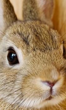 Best Rabbits Jigsaw Puzzles Game apk screenshot