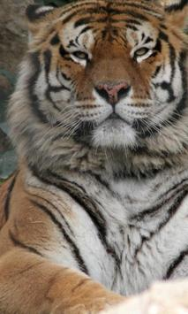 Best Tigers Jigsaw Puzzles Game apk screenshot