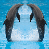 Dolphin Jigsaw Puzzles Game icon