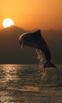 Dolphin Jigsaw Puzzles Game poster