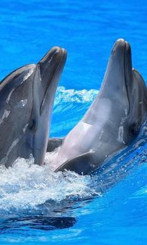 Dolphin Jigsaw Puzzles Game apk screenshot