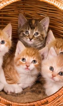 Kittens And Cats Jigsaw Puzzles Game apk screenshot