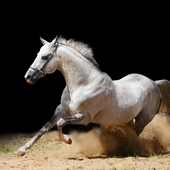 Horse Jigsaw Puzzles Game icon