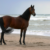 Horses Live Jigsaw Puzzle Game icon