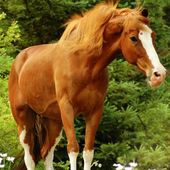 Horses Live Jigsaw Puzzles Game icon