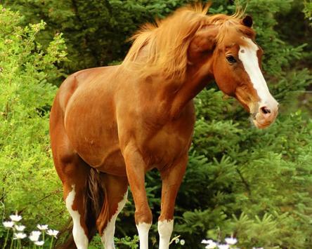 Horses Live Jigsaw Puzzles Game apk screenshot