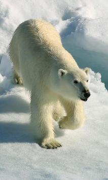 Sea And Polar Animals Jigsaw Puzzles Game apk screenshot
