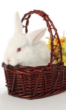 Rabbit Jigsaw Puzzles Game apk screenshot