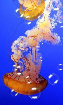 Jellyfish Live Wallpaper poster
