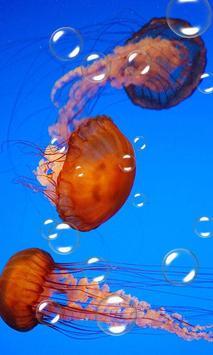 Jellyfish Live Wallpaper apk screenshot