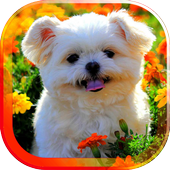 Spring Animals live wallpaper icon