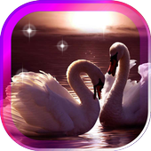 Swans Songs live wallpaper icon