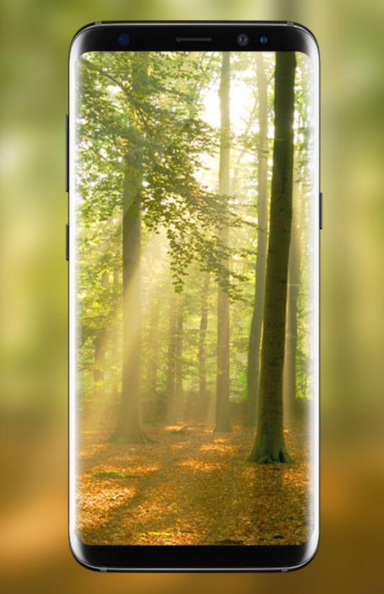 الغابات خلفية حية 2018 Hd خلفية الطبيعة 3d For Android Apk