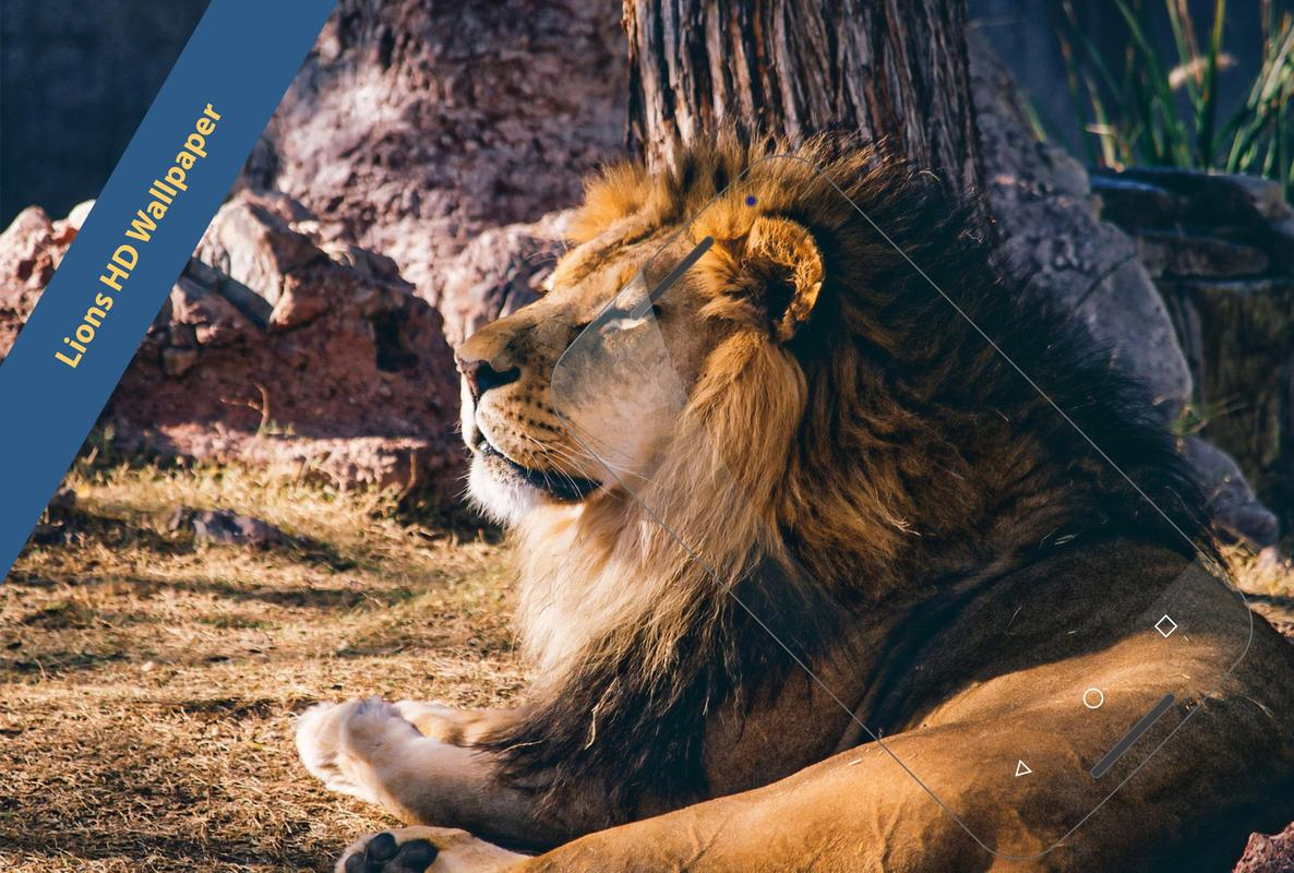 lions/tiger hd wallpaper apk download - free photography app for