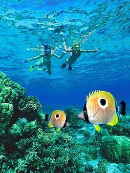 Finding Nemo Wallpaper Apk Screenshot