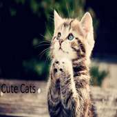 Cute Tom Cats Wallpapers icon