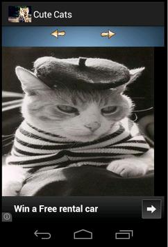 Cute Tom Cats Wallpapers screenshot 1
