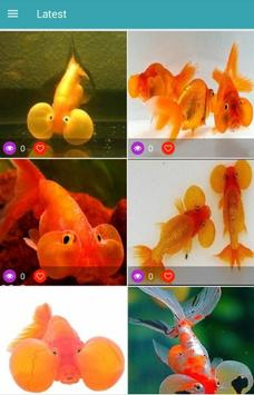 Bubble Eye Goldfish Wallpapers screenshot 1