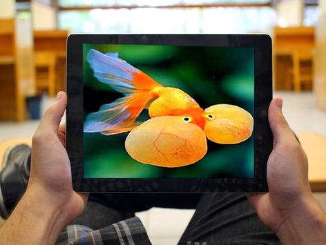 Bubble Eye Goldfish Wallpapers screenshot 5