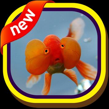 Bubble Eye Goldfish Wallpapers screenshot 6