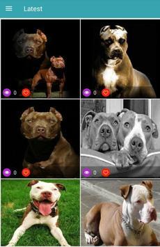 Pitbull Dog Wallpapers screenshot 1