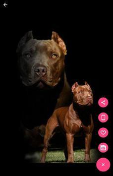 Pitbull Dog Wallpapers screenshot 2