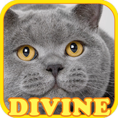 Pet 101 : Guess The Cat Breeds icon