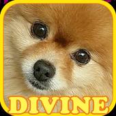 Pet 101 : Dogs Quiz icon