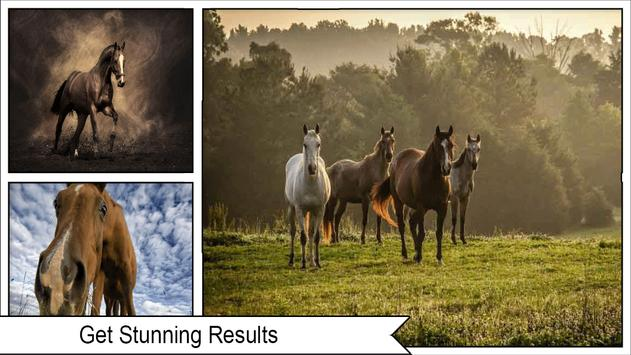 Horse Wallpapers apk screenshot