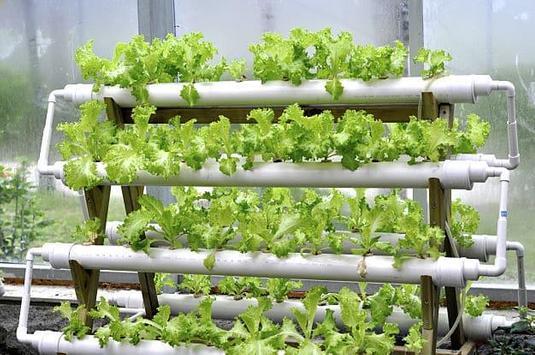Hydroponic Garden Tips and Garden Ideas screenshot 1