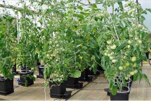 diy hydroponics system screenshot 3