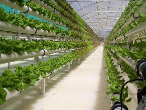 diy hydroponics system screenshot 4