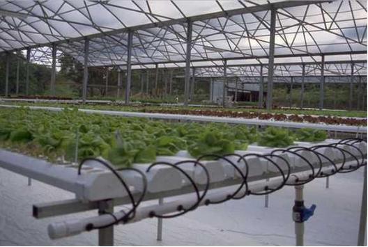 diy hydroponics system screenshot 7