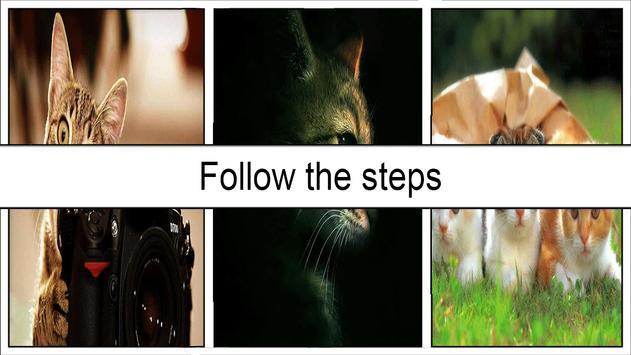 Cat Wallpapers HD screenshot 4