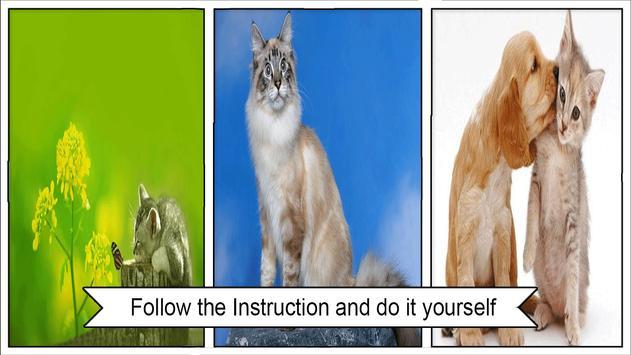Cat Wallpapers HD screenshot 2