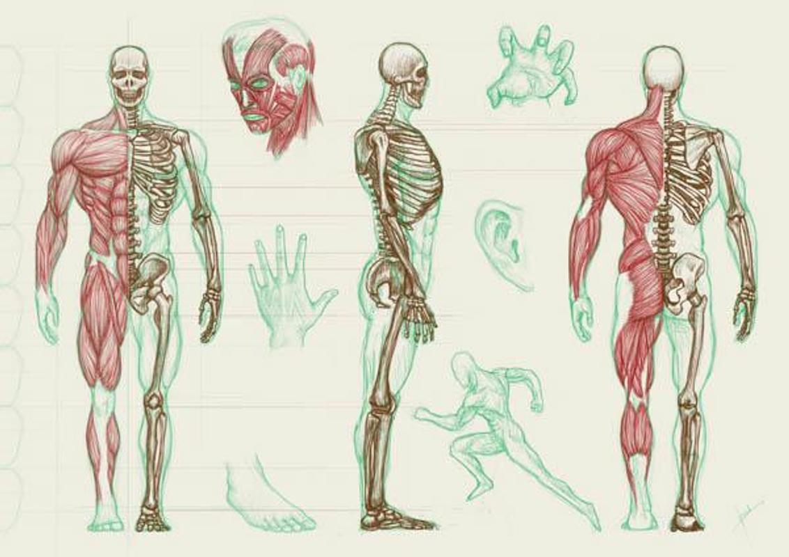 Menschliche Anatomie APK-Download - Kostenlos Lernen APP für Android ...